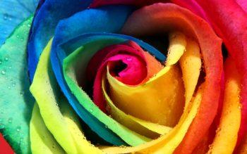 roza-raznocvetnaya-raduzhnaya-lepestki-buton-rosa