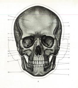 череп1